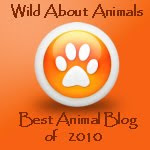 Best Animal Blog for 2010