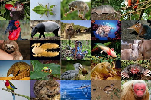 Los animales más raros y peculiares del mundo