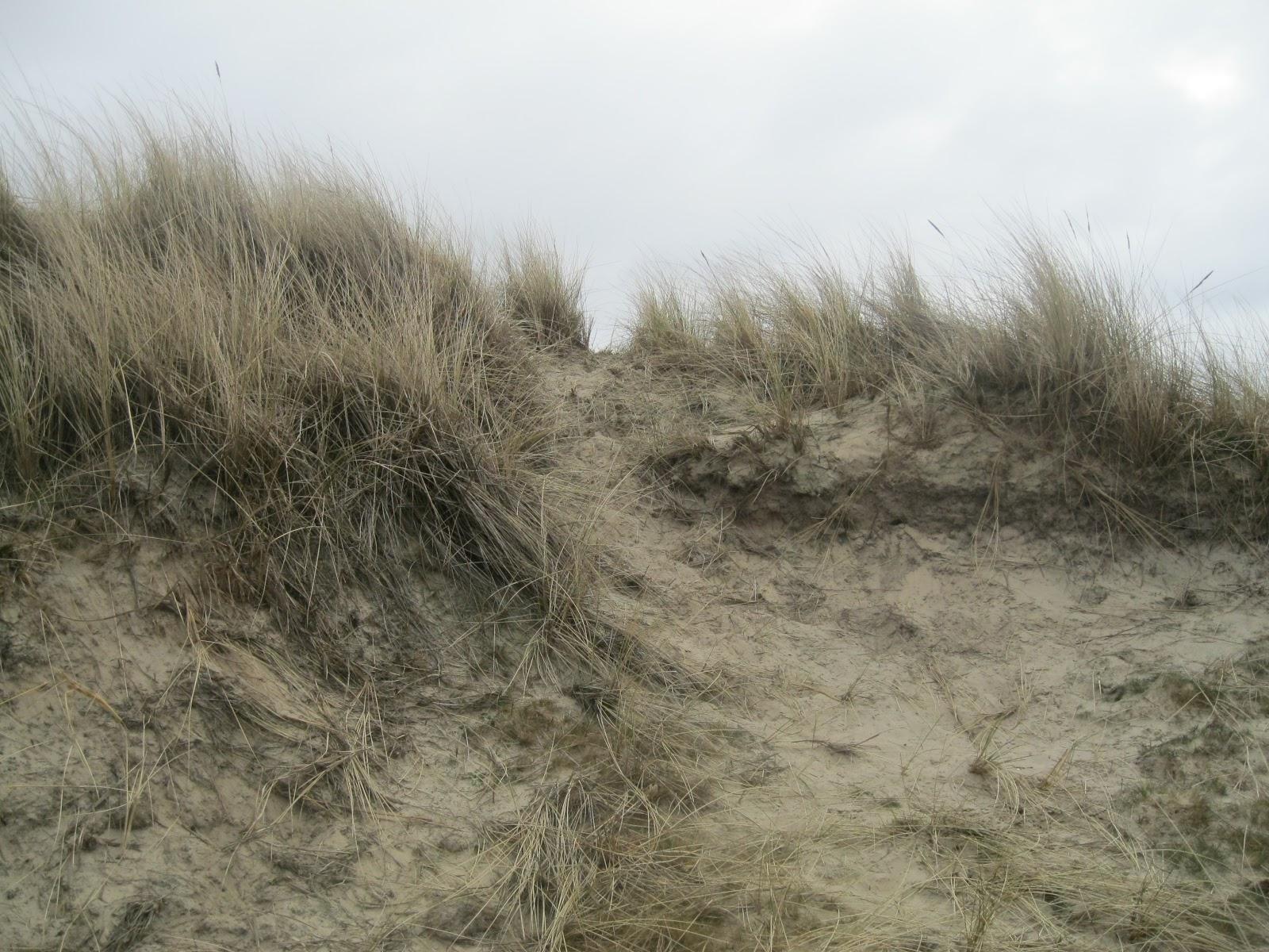 foto de 11Science: Met Jac P Thijsse op Texel