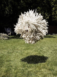Don't Be Amazed If I Tell You That This Funny Looking Mop Is Actually Mark Zuckerberg's Dog
