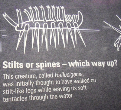 Hallucigenia Natural History Museum