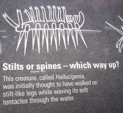 Hallucigenia Natural History Museum