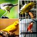 Daftar Harga Burung Terbaru di pasaran