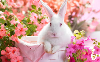 Happy Spring bunny and pink flowers