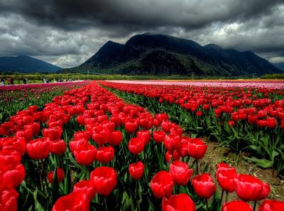 Keindahan Bunga dan Alam