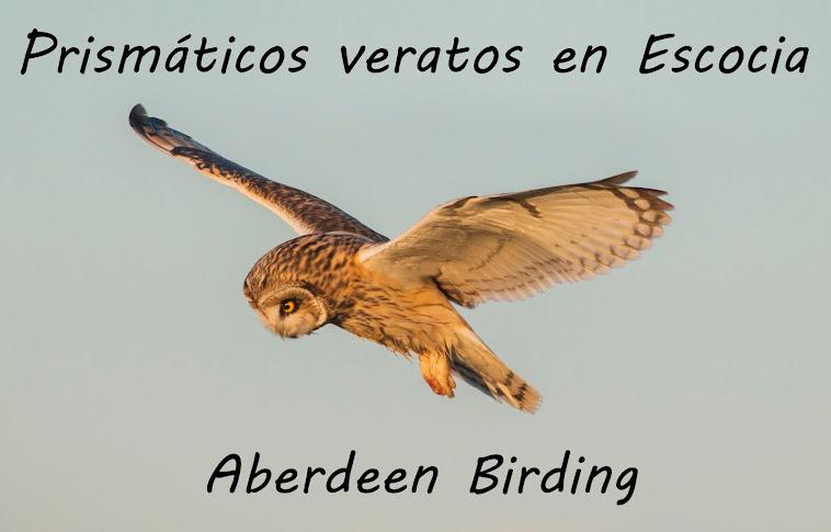 PRISMÁTICOS VERATOS EN ESCOCIA / ABERDEEN BIRDING