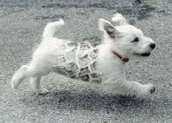Cachorro com pelo esquisito