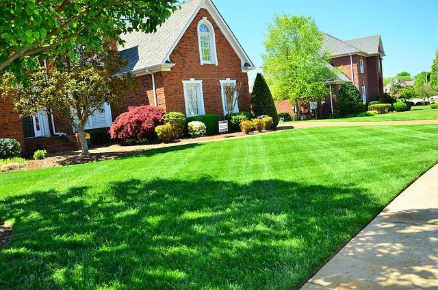 jardin avec gazon en pelouse