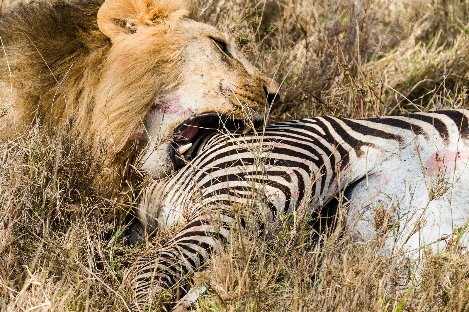 stranded 2 how to kill lion