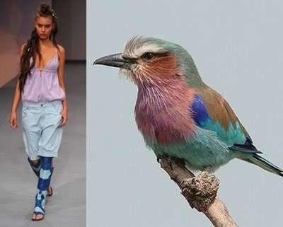Fashion Designer Inspired By Bird Of Paradise