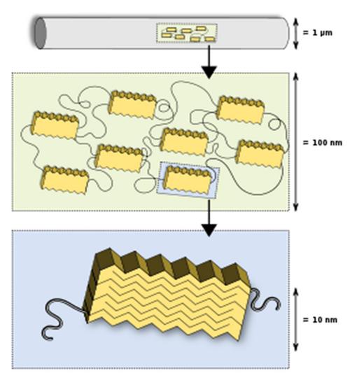 Structure of fiber silk