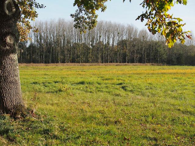De l'autre côté de la zone commerciale s'étend le marais de Redon