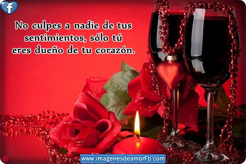 imagen de rosa con frase de amor