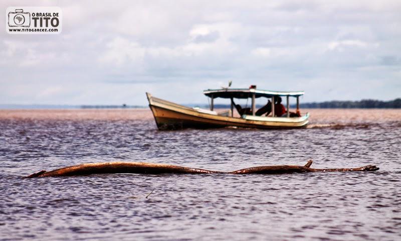 Barco e tronco no encontro das águas dos rios Amazonas e Tapajós, em Santarém, no Pará, na Amazônia