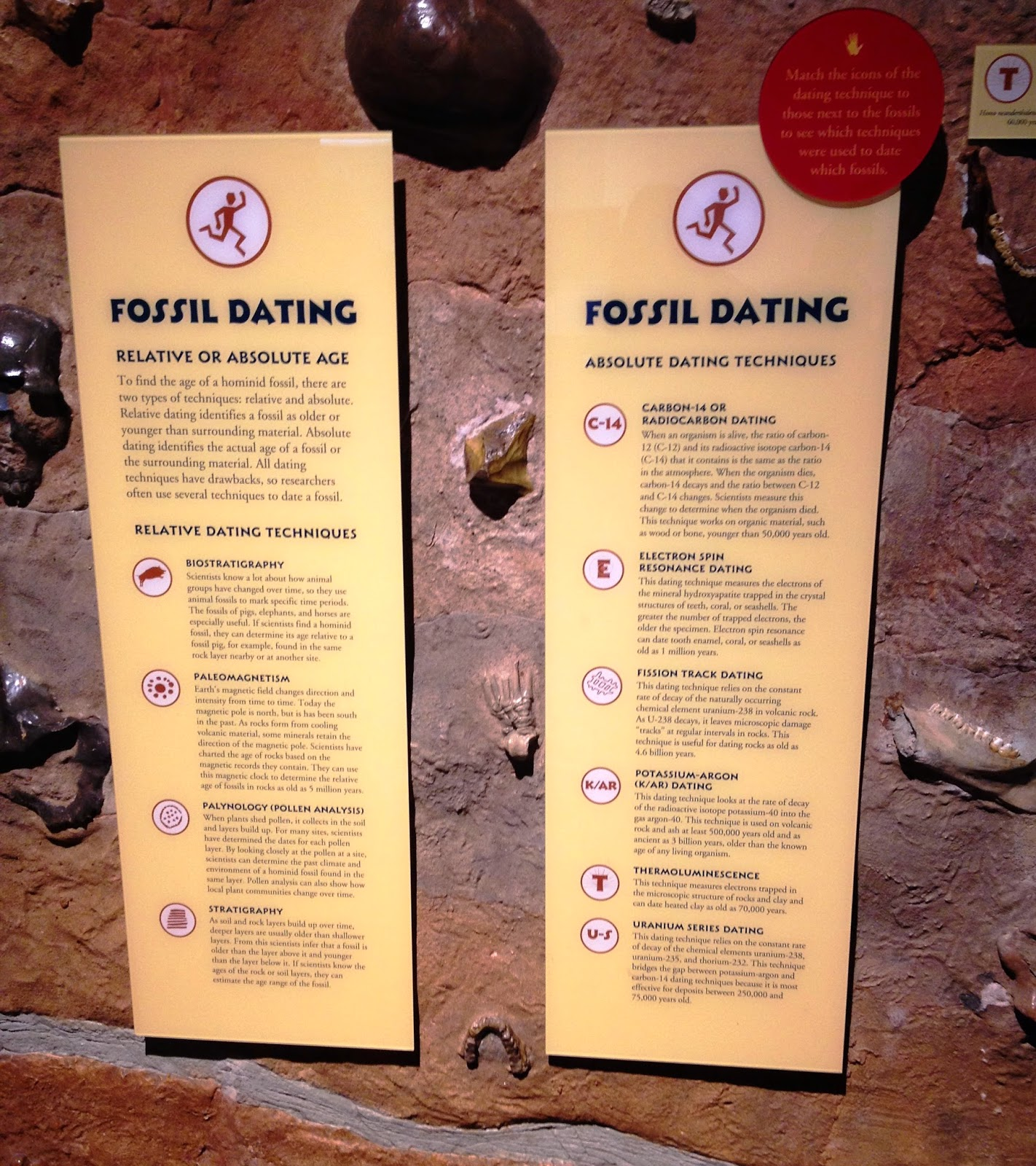 how do paleontologists use carbon dating