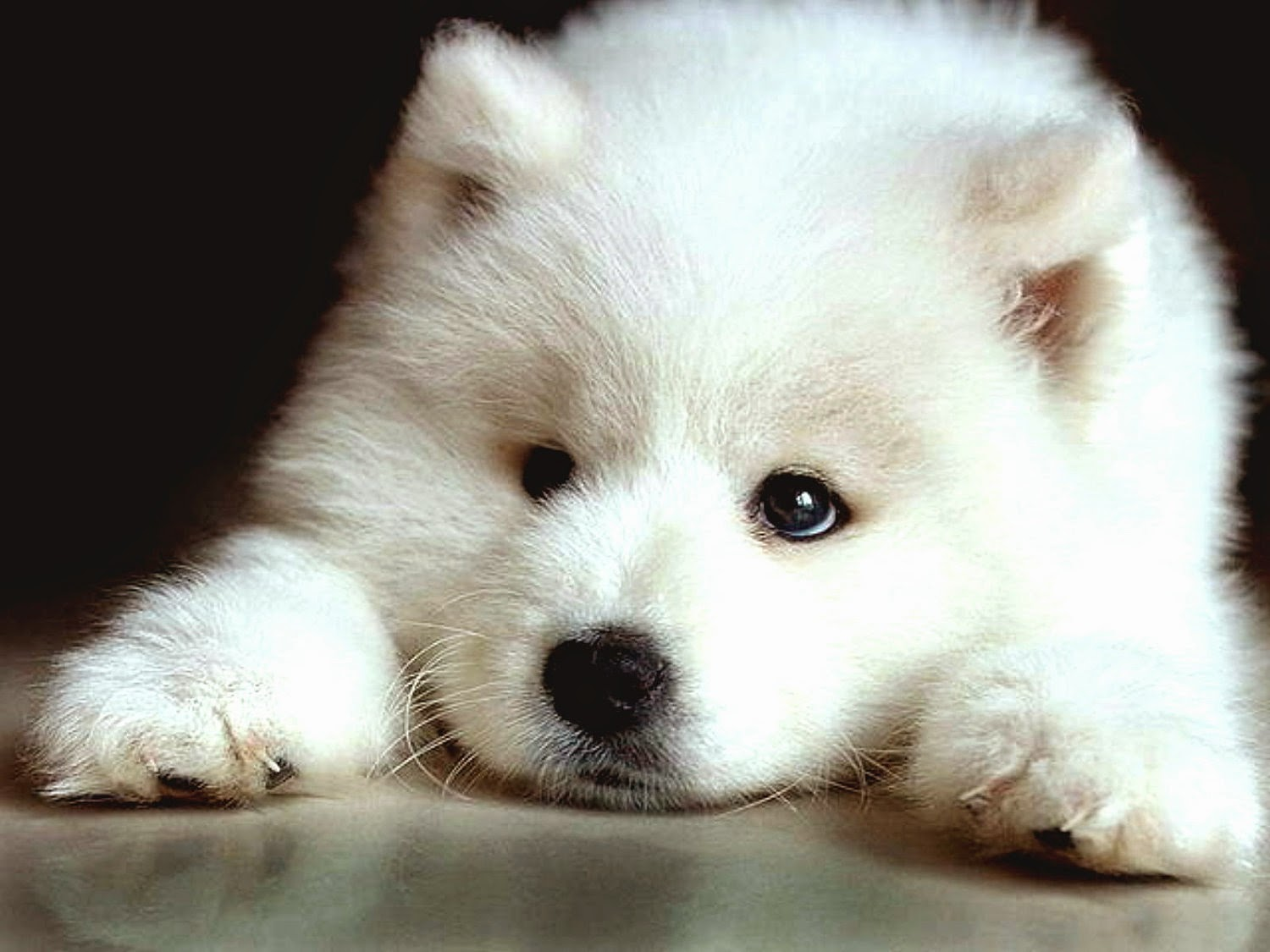 Hypoallergenic Dog Breeds Luv My Dogs