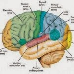 Permalink to 10 Habits That Can Damage the Brain