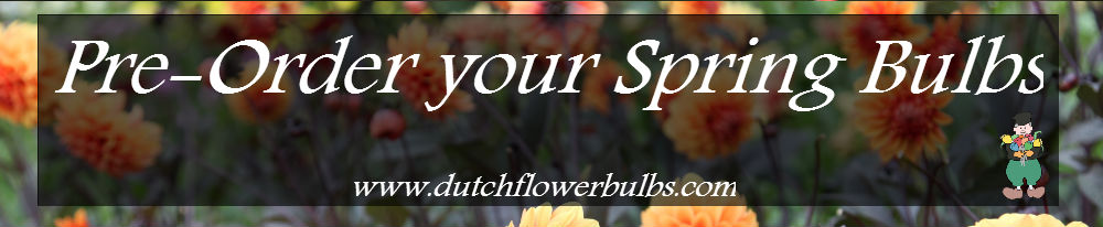 Dutch Flower Bulbs