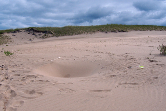 What's Causing These Mysterious Holes in Indiana's Sand Dunes?