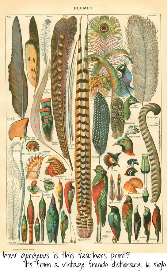 vintage feathers print