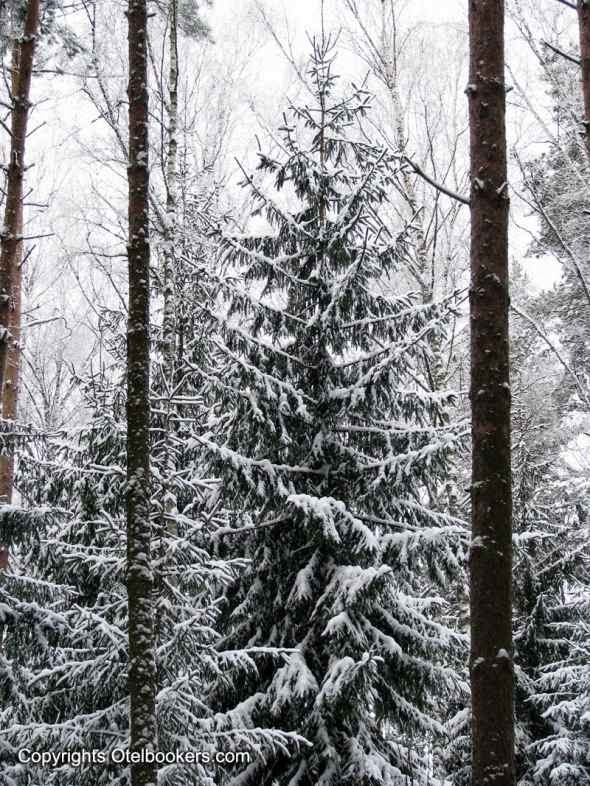 Winter_in_Belarus