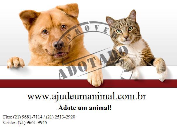 Ajude um Animal