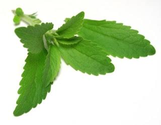 "La ""Stevia rebaudiana bertoni"" (hierba dulce) prospera. Stevia+rebaudiana+en+ecologia+activa"