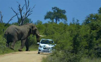 Gajah serang kereta