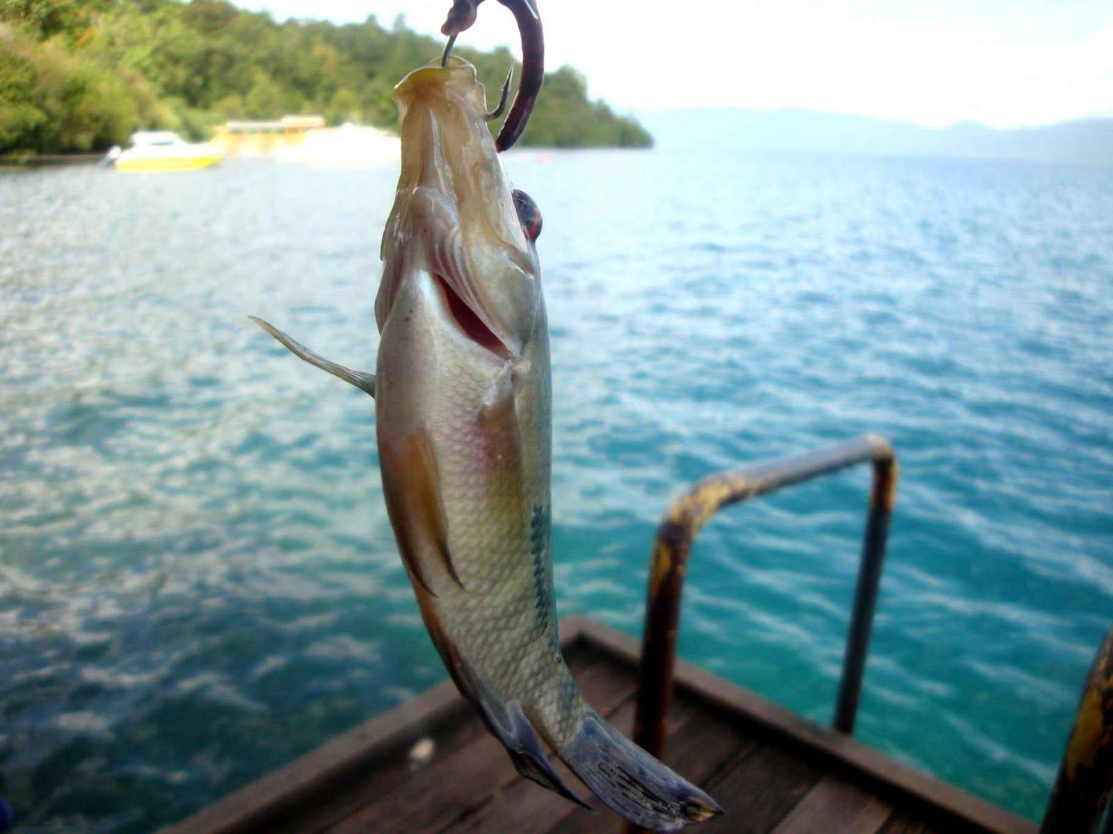 Berkenalan dengan ikan purba dari Danau Matano