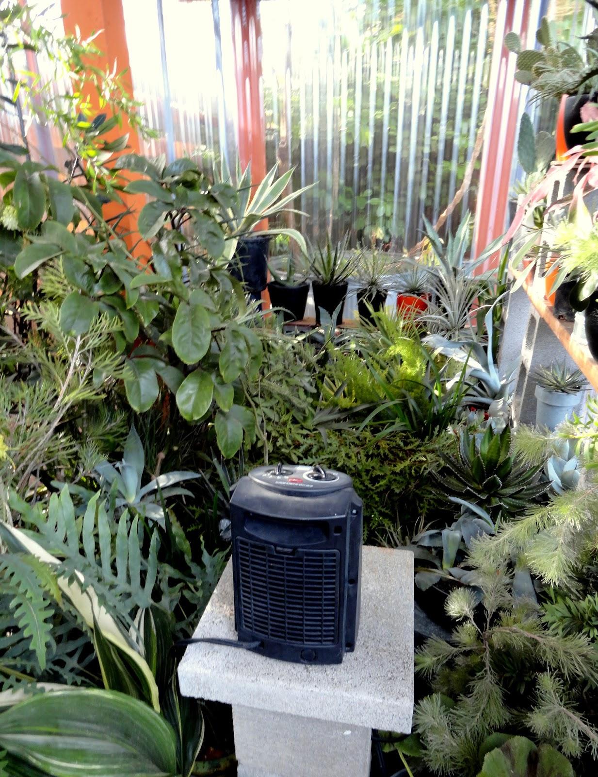 danger garden: How us crazy folk deal with winter