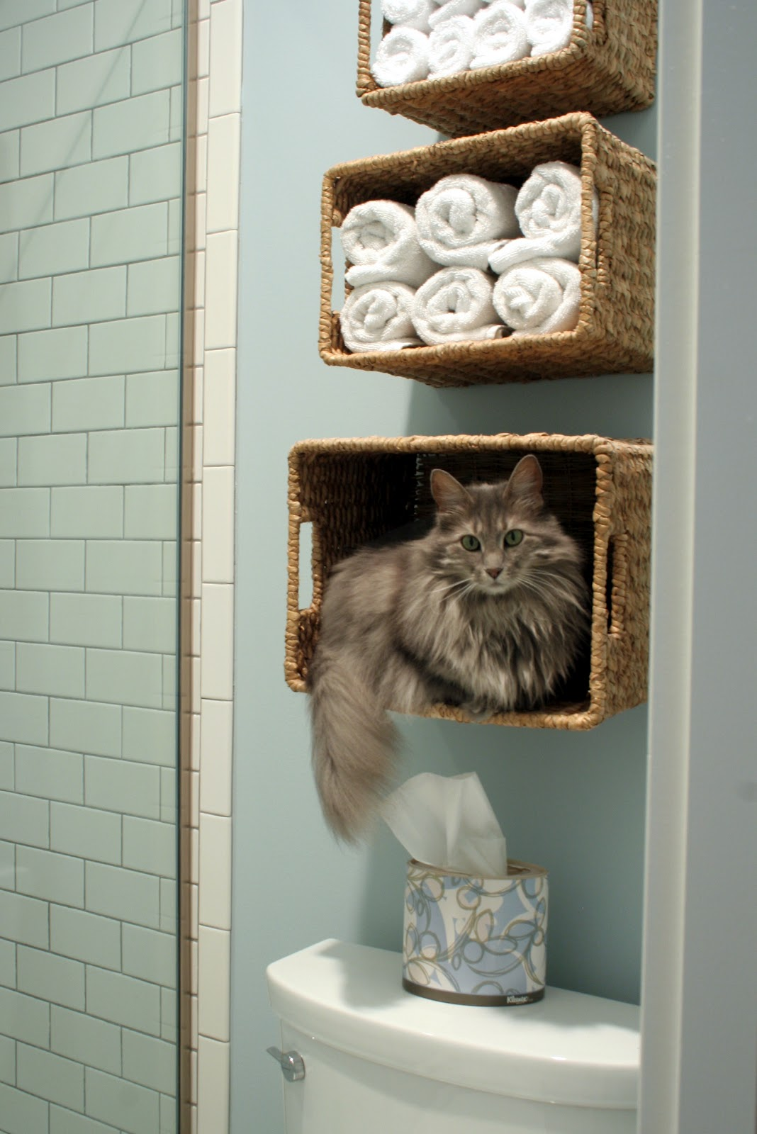 Stuck On Hue Wall Baskets For Kitty Storage