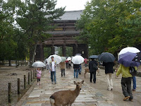 小雨降る南大門、大仏殿参道に向かう路にも鹿がたむろしていた