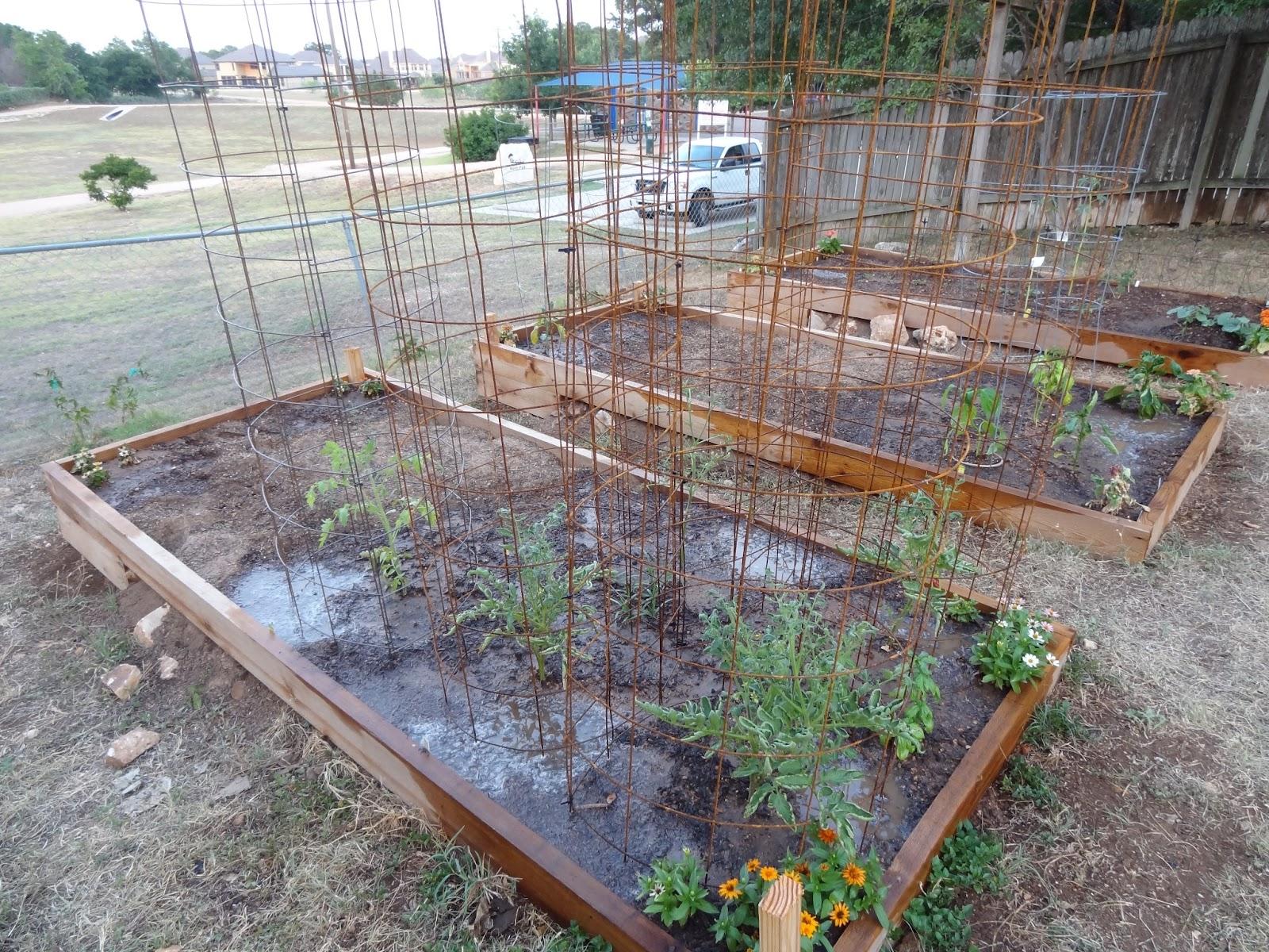 Rebecca\'s Texas Garden: Tomato Cages