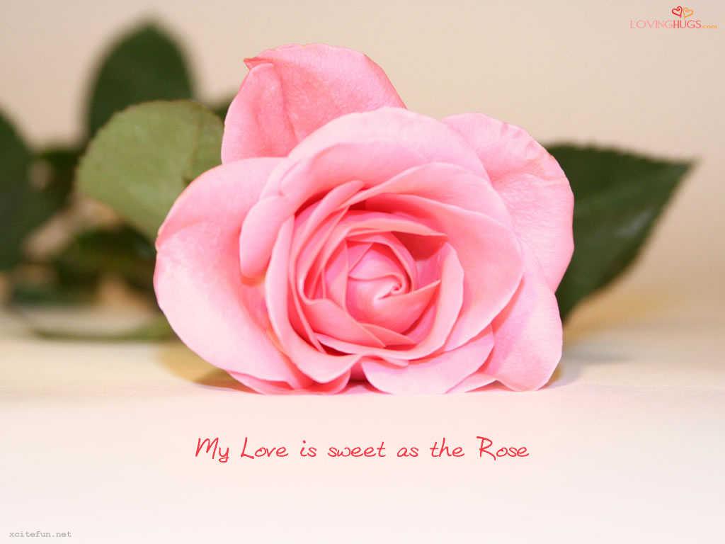 http://4.bp.blogspot.com/-fM-TaJ1da38/TbGVxaY4ZgI/AAAAAAAAA68/R48KM6F79Pw/s1600/71%252Cxcitefun-love-wallpaper21.jpg