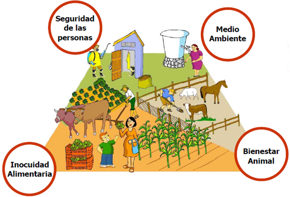 XEBRE DELICATESSEN: Agricultura limpia. Buenas Pácticas