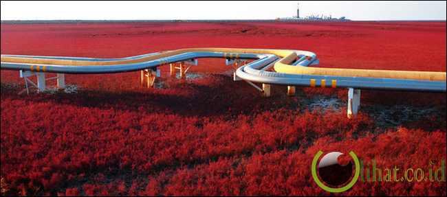 Pantai Merah - China