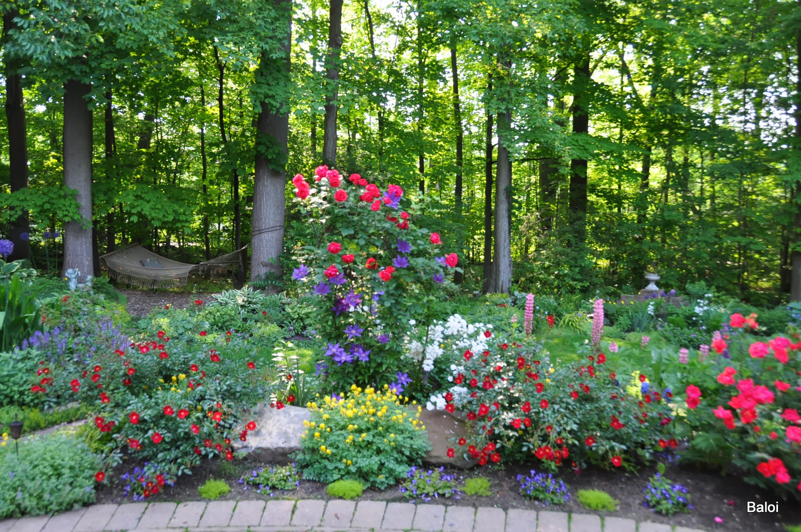 Flower Combinations For Flower Beds Combinations of Flowers
