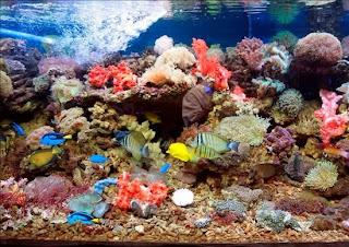 Islas-vírgenes_parque-nacional-Buk-Island-Reef