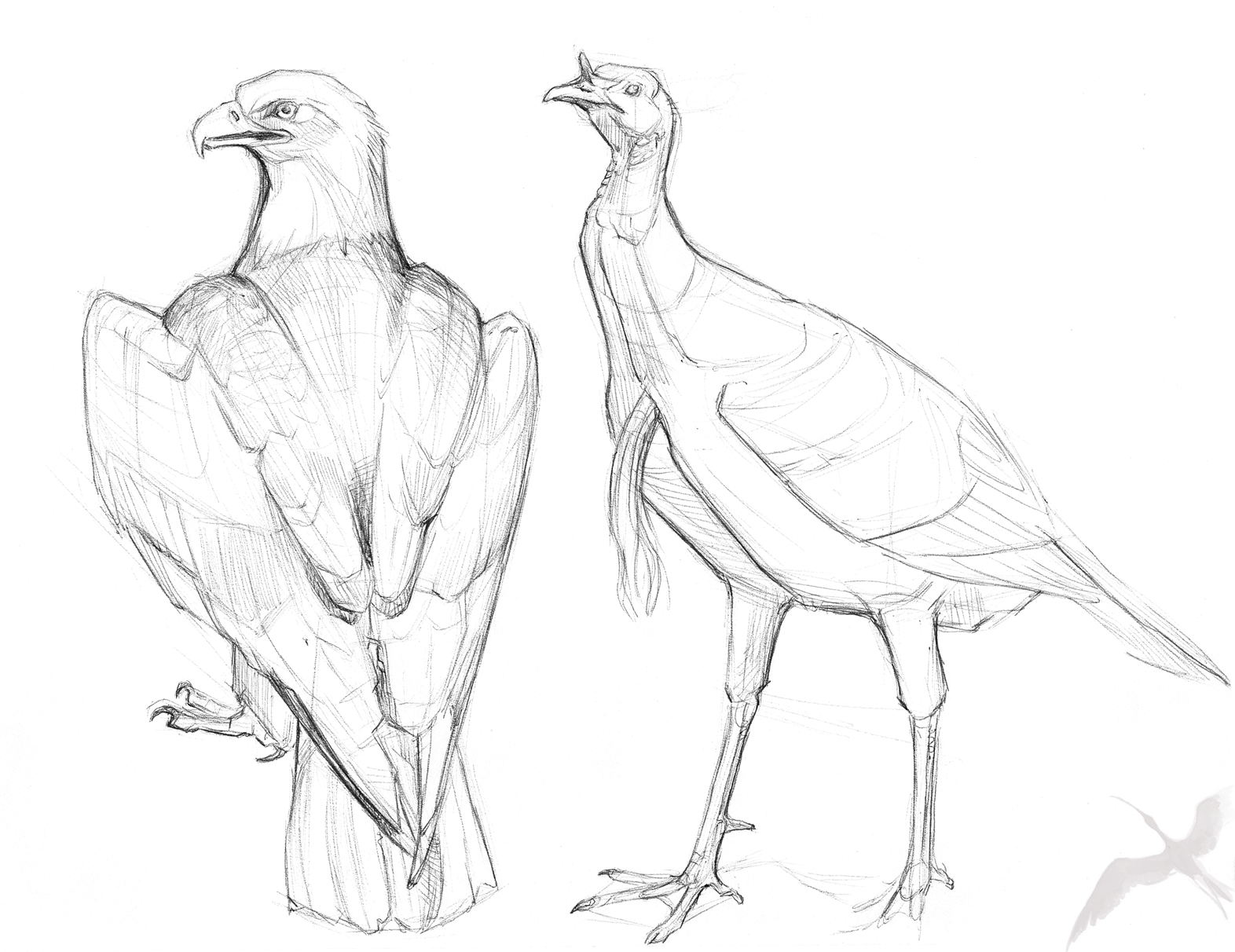 ... Turkey Drawing Pencil drawing wild turkey head sketch coloring page