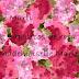 Los zapaticos de rosa