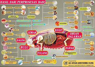 gambar nama bagian bagian tubuh babi   munsypedia   un1x project