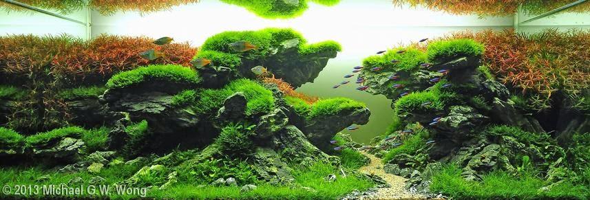 Aquascape adalah seni mengatur tanaman air dan batu, batu karang ...