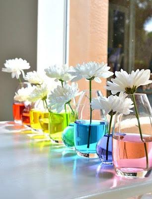 Flores - cor
