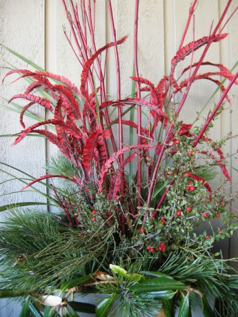 Christmas planter, red dogwood, pine,