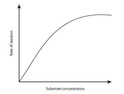 effect of enzyme concentration on amylase The article examines the effects of temperature on amylase activity in saliva this experiment shows that salivary amylase undergoes a reversible denaturation process and that sodium chloride slows down the irreversible denaturation process.