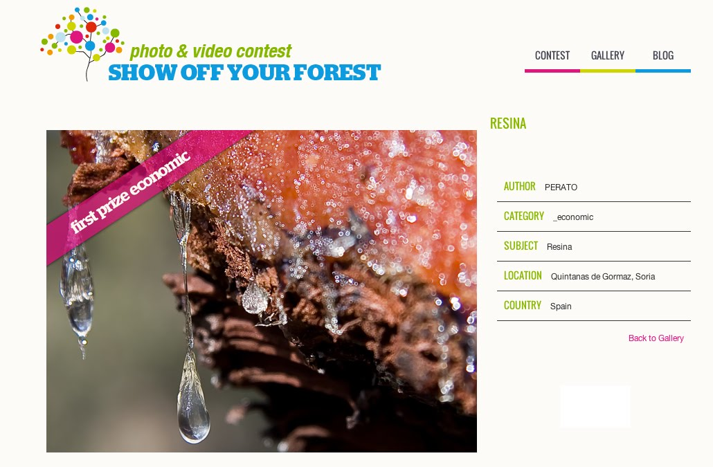 Show off your forest
