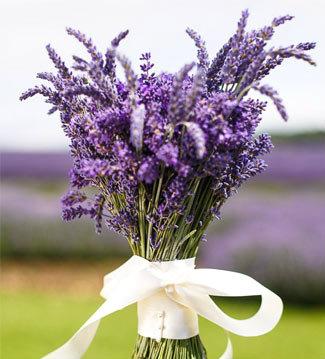 Todo con las flores decorar crear degustar cuidar - Lavanda clima ...