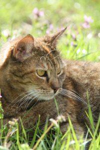 Our Tortie Cat Portia