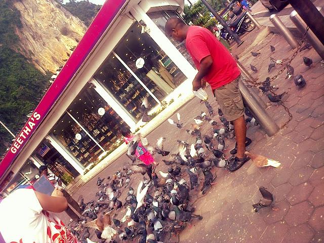 manong, the bird feeder