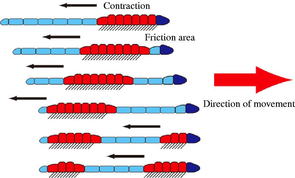 Movement Of Earthworm on Earthworm Activities
